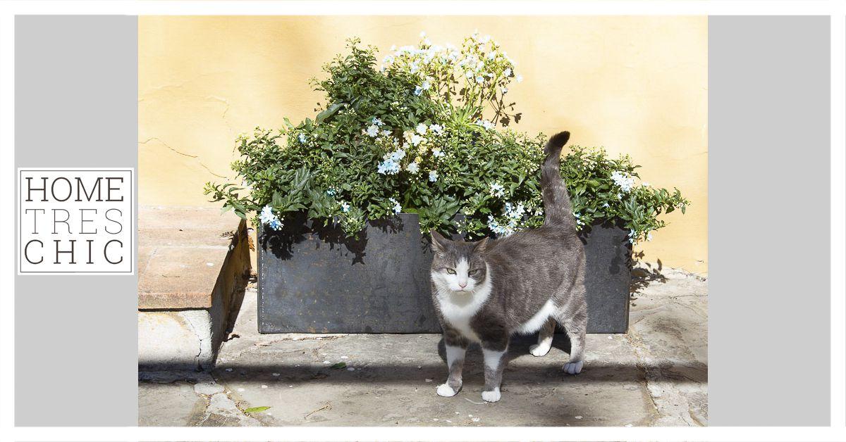 Come fare l'orto in giardino con Hometrèschic